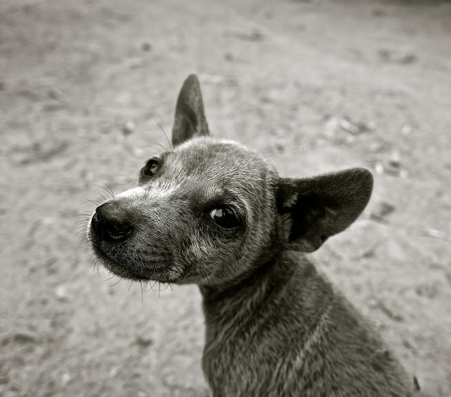 dog-589002_1280